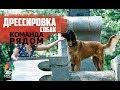 Дрессировка команды 'Рядом'| Как правильно дрессировать собаку | Дрессировка и воспитание собак