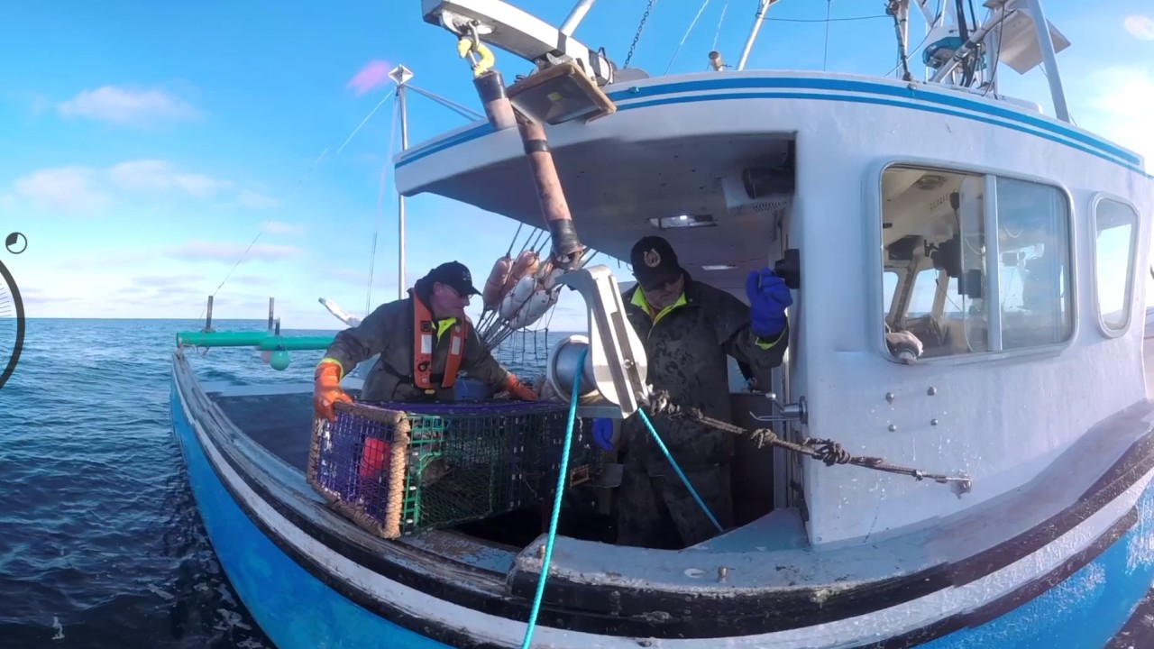 360 virtual reality experience on a canadian lobster for Virtual reality fishing