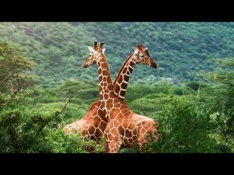 Nechisar National Park, Ethiopia