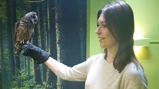 В Москве открыли антикафе с совами