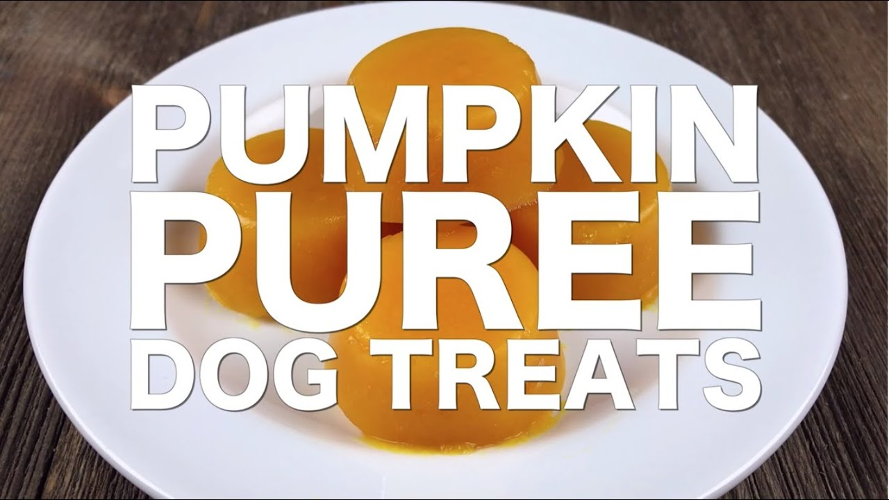 how to make pumpkin puree for dogs
