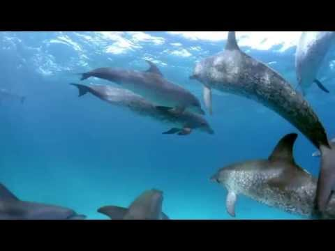 Tangerine Dream-Song of the Whale part 1
