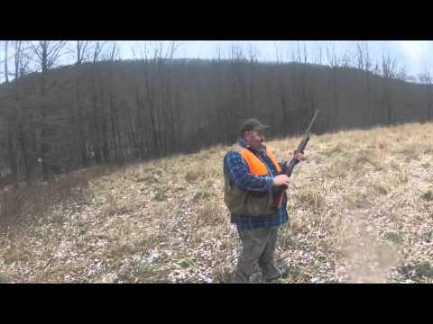 Pheasant Hunting Ny