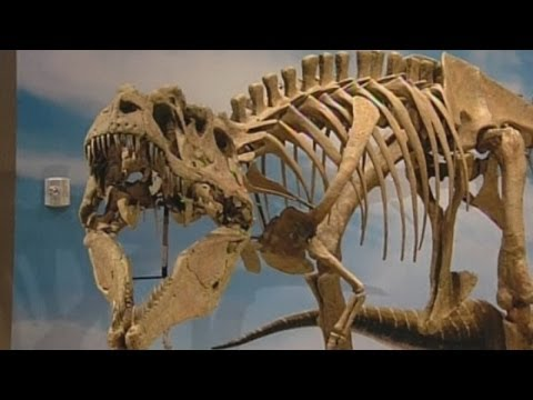 Ferocius dinosaur named Lythronax argestes and