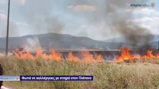 Φωτιά σε αγροτική έκταση στην περιοχή του Πλατάνου