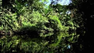 Водная жизнь - [5_26] Спокойное течение
