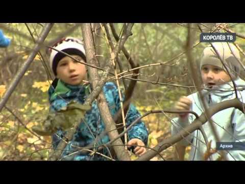 Суд наложил арест на проданную частным лицам землю Комитетского леса