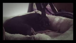 документальный фильм про подозрительную собаку