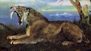 Саблезубые кошки (рассказывает палеонтолог Иварс Зупиньш)