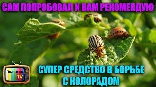 видео Проверенные народные средства от колорадского жука