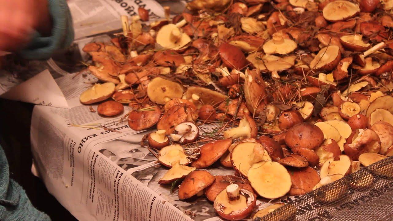 как обработать грибы маслята