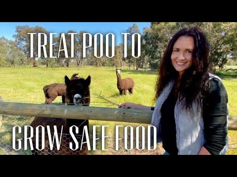 USING ALPACA POO IN THE FOOD GARDEN - GROW FOOD WITH ALPACA POO