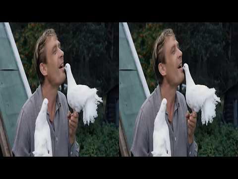 Любовь и голуби 3D