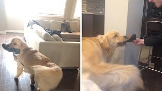 Cheeky Dog Loves Stealing Shoe…