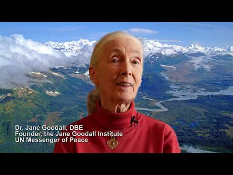 Jane Goodall Supports Bering River Conservation