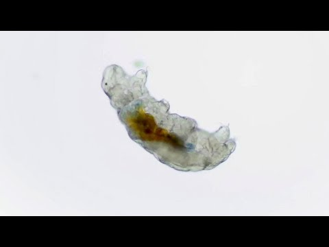 Tested From Home: How to Find Tardigrades In Your Backyard!