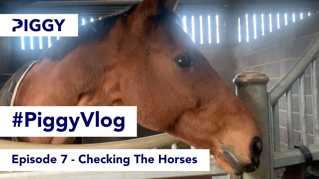 Checking The Horses   Episode 7   #PiggyVlog 2021