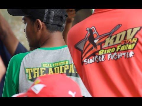 BRANDY WATCH : Duel Kacer Seru Kelas Maharaja - ADIPATI vs RENCONG vs SPEED RACER di Piala Raja 2016