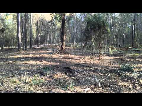 Forestry mulching in North Louisiana by Land Beautification LLC.
