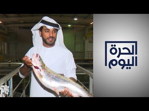 مزارع سمك السلمون تزدهر في صحراء دبي  - 23:58-2019 / 11 / 19