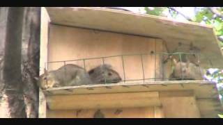 Squirrel House Deck.wmv
