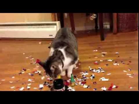 Thumbnail for Cat Video New Years Eve. Cat Singing Auld Lang Syne. Happy New Year!
