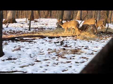 Backyard Adventures Steve 2-1-2014 Deer hunt