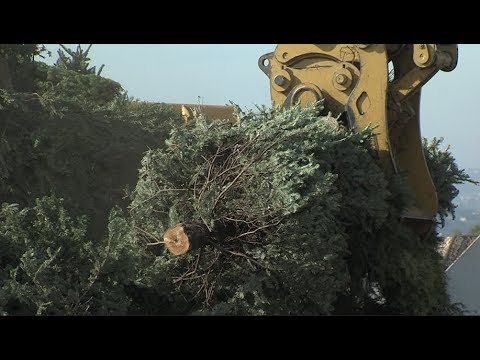 San Diego Offers Free Christmas Tree Recycling - San Diego Offers Free Christmas Tree Recycling - YouTube