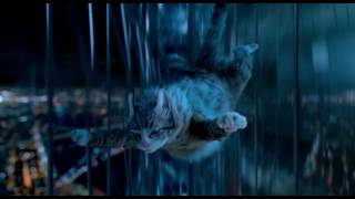 Video Nine Lives - Mr Fuzzypants? download MP3, 3GP, MP4, WEBM, AVI, FLV Januari 2018