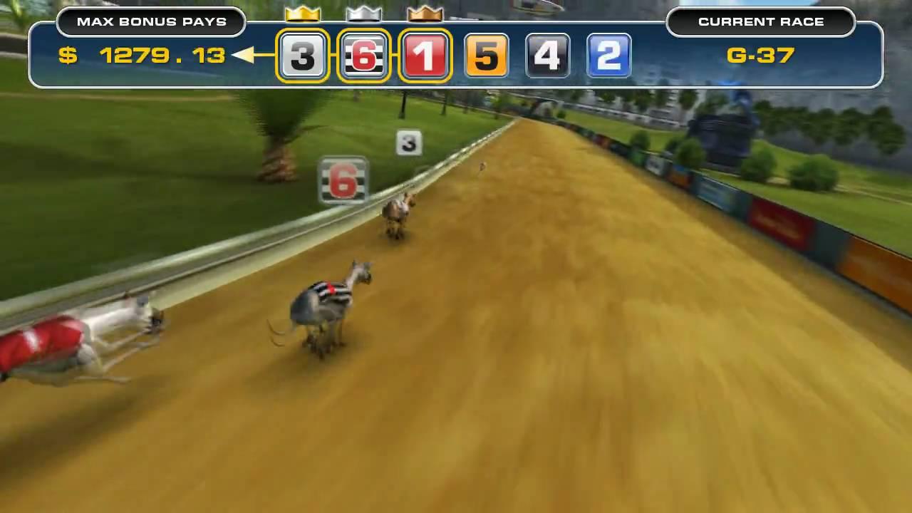 Virtual Greyhound Racing Game