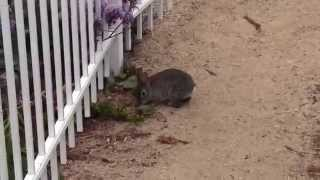 bunny at Cottage inn by the sea Pismo Beach