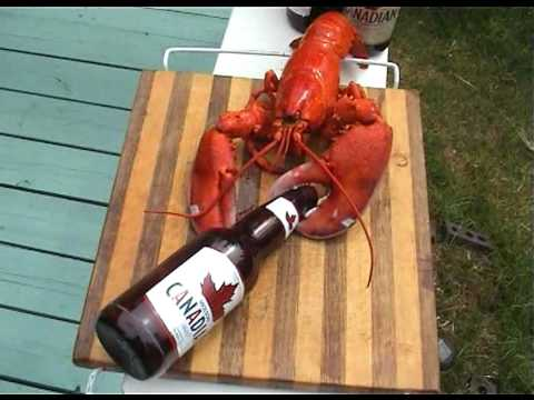 Lobster song