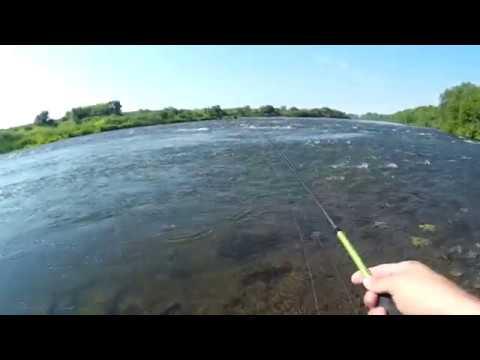 Видео ловля жереха в августе