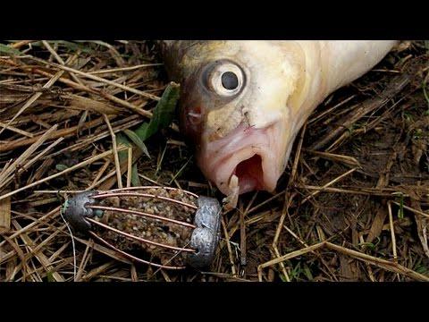 Супер прикормка для леща, карася и другой белой рыбы.