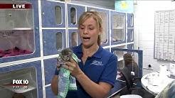 Arizona Humane Society teaching volunteers to care for kittens