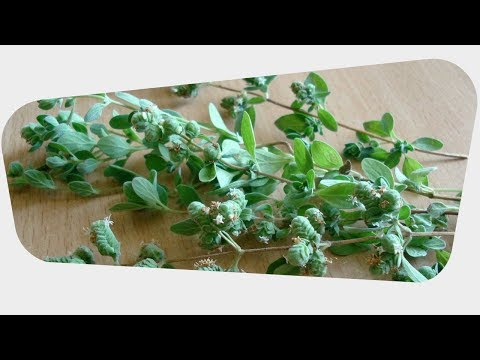 Health Benefits of Marjoram Leaves
