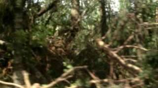 Ураган Лен.область.Последствия п.Сосново июль 2010(, 2010-07-30T17:04:01.000Z)