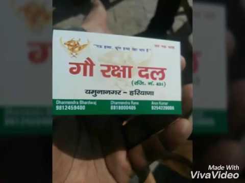 Gau raksha dal yamunanagar( Dharmendra bhardwaj)