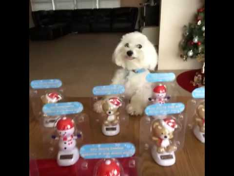 dog mimics bobble heads youtube