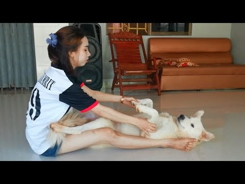 PRETTY OWNER GIRL NEVER LAZY TO TAKE CARE HER DOG