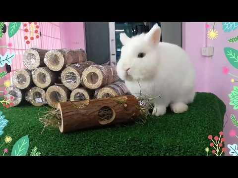 ของเล่นกระต่าย ขอนไม้สำหรับใส่หญ้า