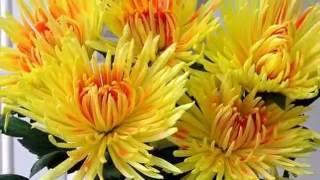 AUTUMN  FLOWERS  2