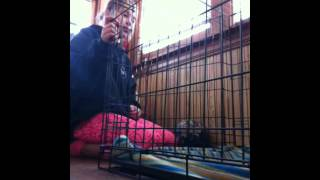 How To Set Up A Guinea Pig Cage Out Of A Dog Crate