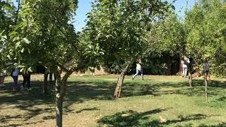 [AIP] Artist Immersion program Italy: Garden exploration in Siena Italy 2019