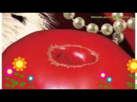 Томат обыкновенный Королевская Мантия. Краткий обзор, описание характеристик, где купить семена
