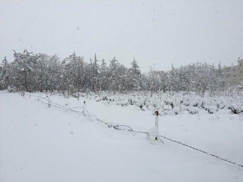 عاصفة ثلجية تقتل 10 لاجئين سوريين على حدود لبنان  - 17:23-2018 / 1 / 19