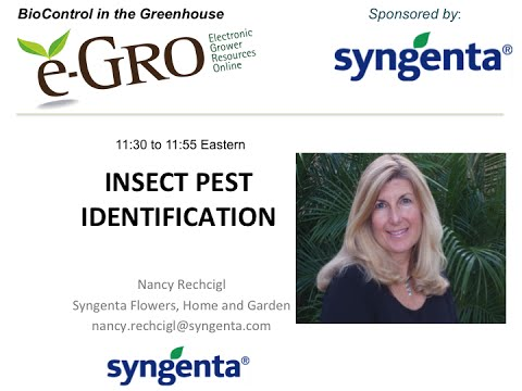 Insect Pest Identification