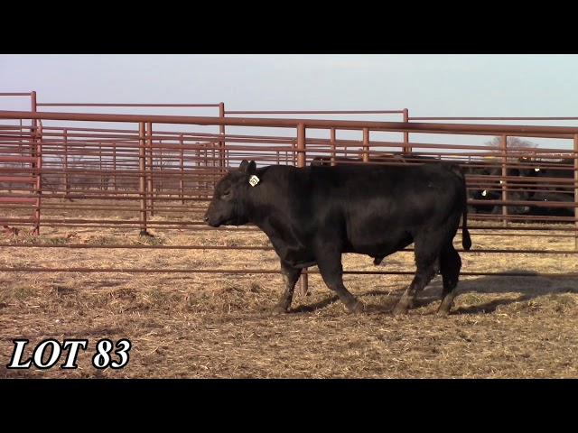 Mead Angus Farms Lot 83