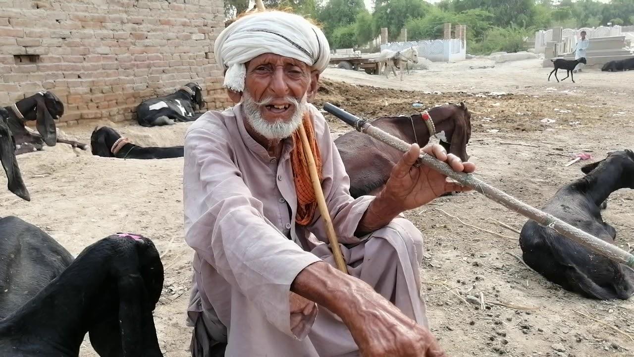 Beetal Bakri Experts - Baba Jee From Pakpattan Sharif - Baba Jee Ka  Experience About Beetal Goats