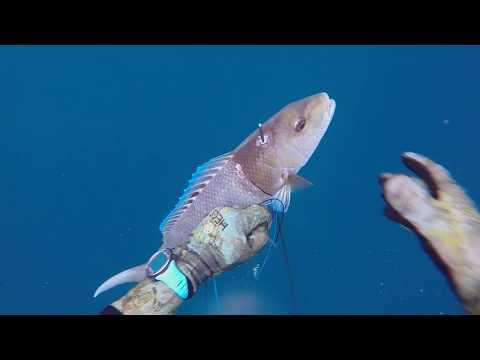 Spearfishing Green Jobfish Mid Water